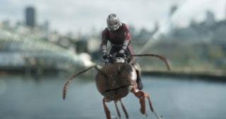 羽も搭載し超高速飛行が可能なワスプに対して、アリに乗せてもらってしか飛べないアントマン…。あからさまなスペックの差に、チームワークも微妙です