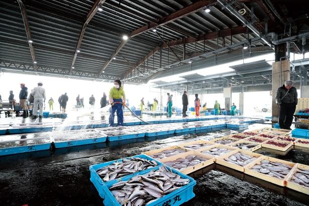 愛知県下トップの水揚げ量を誇る豊浜市場