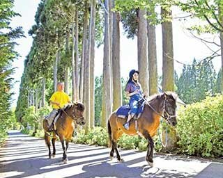 優雅な乗馬体験はいかが?岐阜&長野の高原で楽しむホーストレッキング