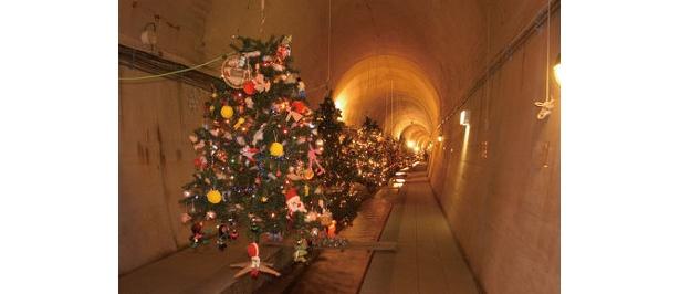 湧水の真ん中を流れる湧水路の脇がクリスマスツリー並ぶ