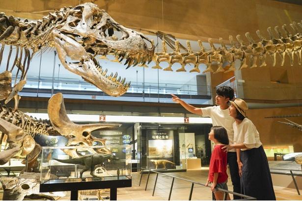 肉食恐竜の代表格、ティラノサウルスの骨格標本に興味津々!