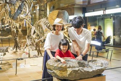アンモナイトの実物化石にふれてみよう。「ザラザラ、ボコボコしているよ!」