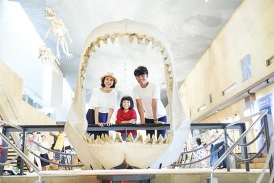 ホホジロサメの祖先・カルカロドンのあごはとっても大きい!