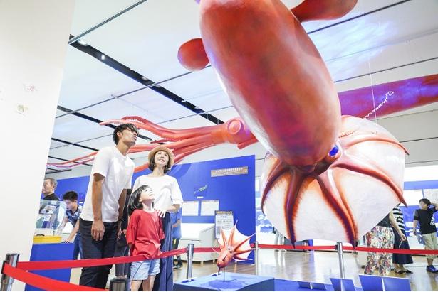 白亜紀にいた約2.4メートルのヒキダコウモリダコの復元模型。「わ~!大きいね~!」