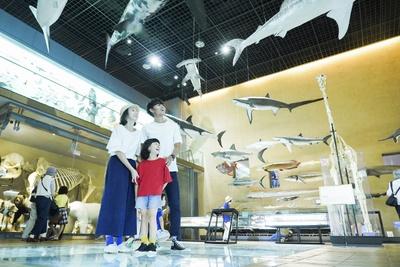 アースモールの奥「生命の多様性館」では、さまざまな生き物の剥製を展示
