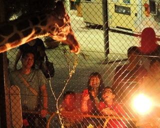 岡山県の池田動物園で毎年恒例「ナイト・ズー2018」開催