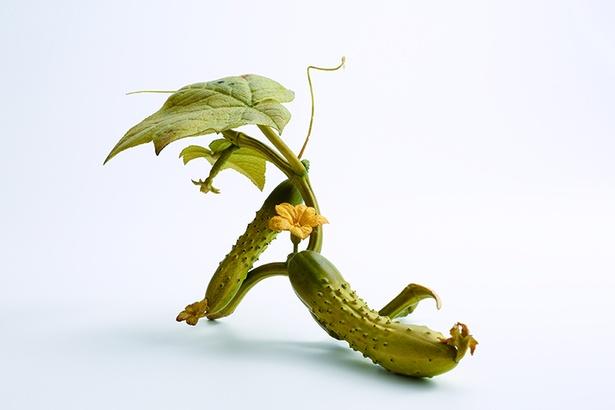 安藤緑山の「胡瓜」は象牙で作られている