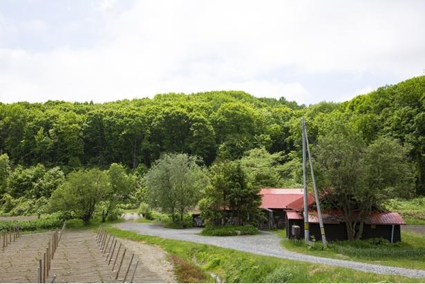 森と畑に囲まれた山里に、赤い屋根の古びた建物がよく映える「cafeゴリョウ」