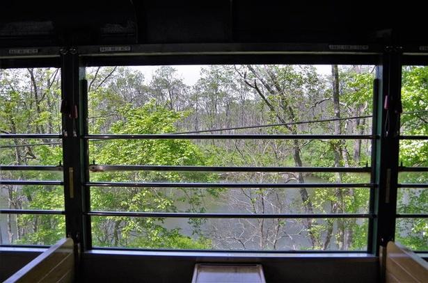 展望客車の大きな窓は上半分が開く。車内に流れる湿原の涼しい風は天然のクーラー