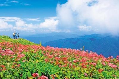 プチハイキングをしつつ、絶景と高山植物を楽しもう/伊吹山