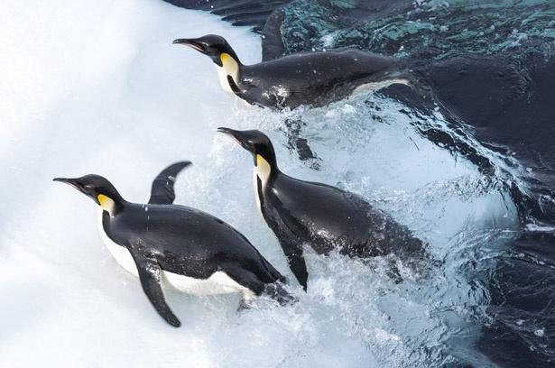 第78回アカデミー賞長編ドキュメンタリー賞に輝いた『皇帝ペンギン』の続編