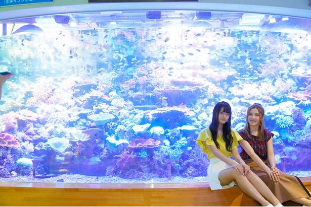 色鮮やかな熱帯の海を背景に記念撮影♪
