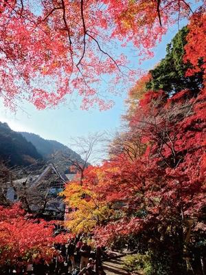 高尾山(東京都八王子)
