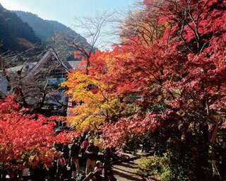 高尾山で紅葉を楽しむ絶景ハイキング!立ち寄りスポットも紹介