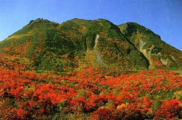 山麓が燃えているかのような紅葉が広がるイワオヌプリの紅葉