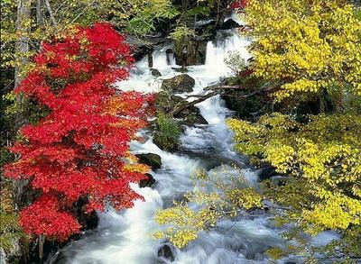 鮮やかに色づく阿寒湖畔の紅葉