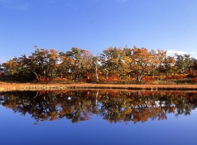 鏡沼の湖面に映し出される紅葉の美しさは必見