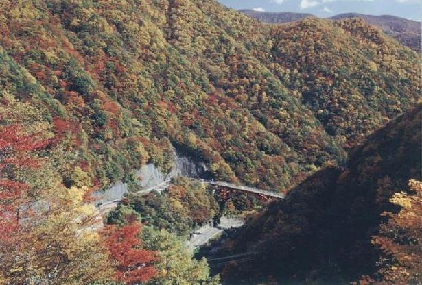 仙人峠の紅葉