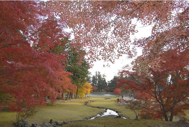 紅葉が彩る特別名勝、毛越寺の浄土庭園