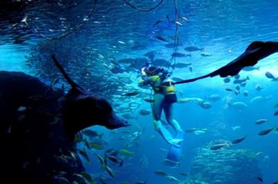 夜の魚たちの様子に興味津々
