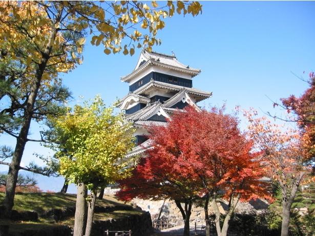 【写真を見る】国宝・松本城に映えるモミジの紅葉