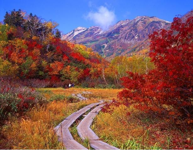 初冠雪があれば三段紅葉が楽しめる栂池自然園