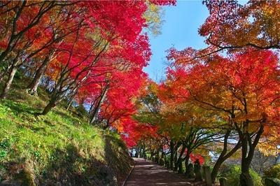 【写真を見る】福井県内最大級の約1600本のモミジが園内を彩る西山公園