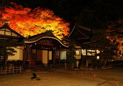 【写真を見る】日本三名泉のひとつ・下呂温泉で見る紅葉ライトアップ