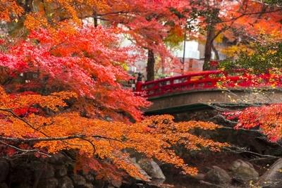 川沿いに鮮やかな紅葉のアーチが架かる