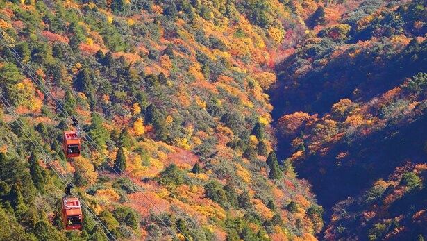 御在所岳は平均気温が15度になると色づき始め、10~12度で見頃となる