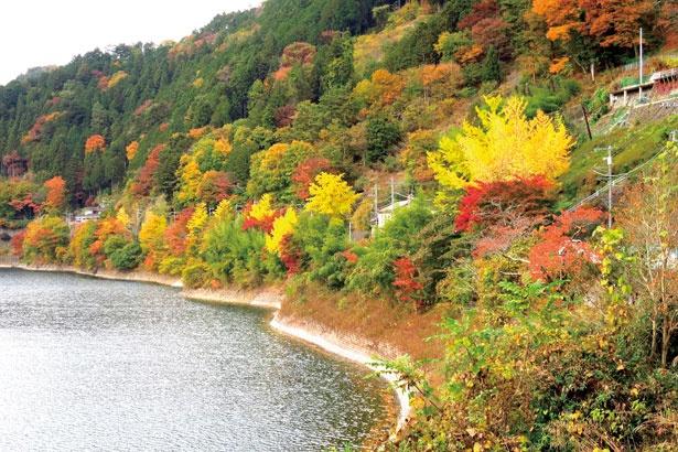 奥多摩湖は、多摩川を小河内ダムによってせき止めて造られた人造湖。紅葉と湖のコントラストが美しい