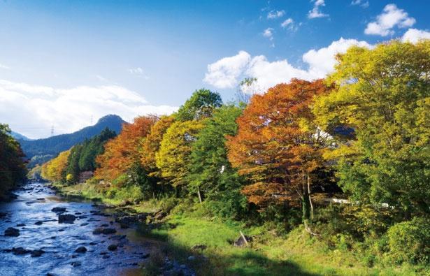 里山の雰囲気が残る秋川渓谷。川のせせらぎを聞きながら紅葉狩りをしよう