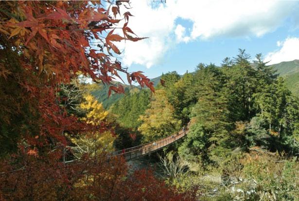 多摩川の支流で最大といわれる秋川。あきる野市から檜原村にかけてが「秋川渓谷」と呼ばれる