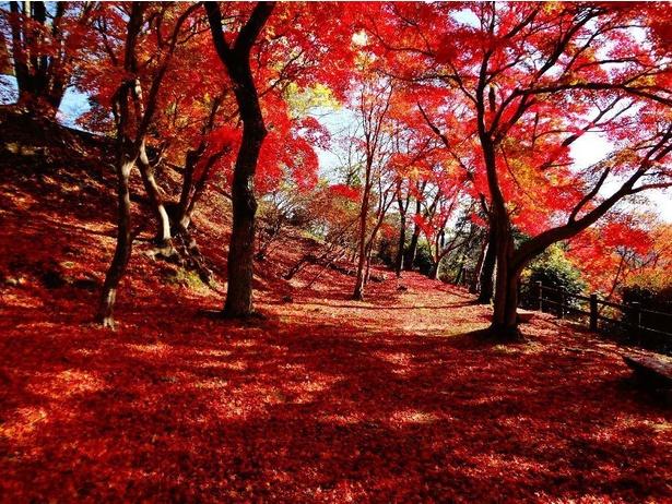 秋はモミジの紅葉と月見が楽しめる都市公園