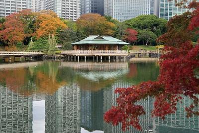 都内で唯一の海水の池である、浜離宮恩賜庭園の「潮入の池」。水面に茶屋が映り込み、趣深い景観に