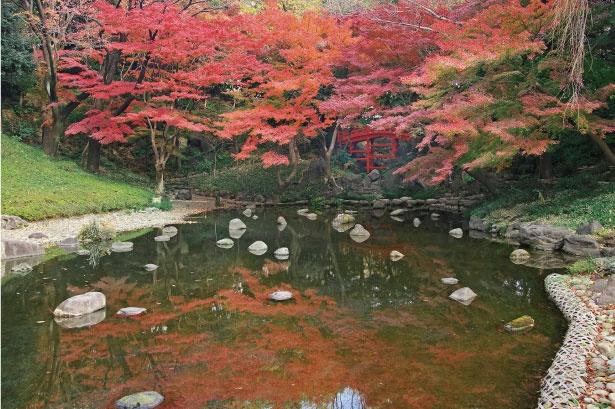 小石川後楽園の中でも特におすすめの紅葉スポットのひとつである、大堰川周辺。見事に色付いた紅葉が楽しめる