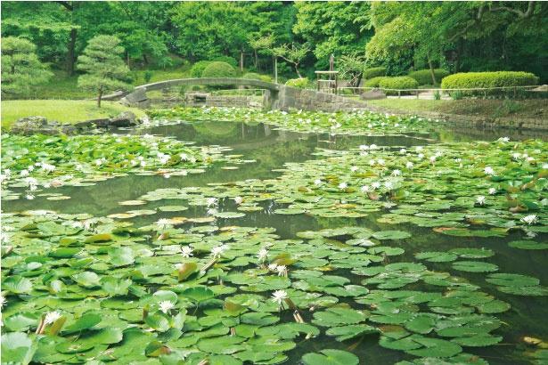 小石川後楽園の内庭。秋には鮮やかに紅葉し、人気のスポットになっている
