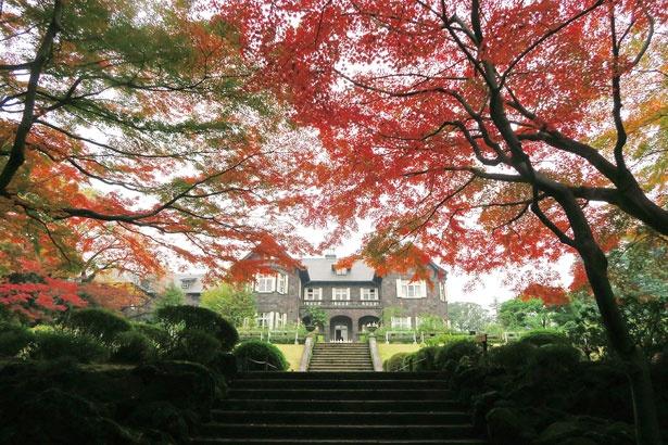 日本庭園に広がる約220本のモミジと、常緑樹とのコントラストが楽しめる旧古河庭園