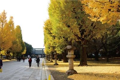 参道の並木が黄金色に輝く靖国神社。明治12年に奉納された石燈籠の列とイチョウ並木は趣深い