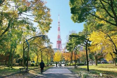 芝公園に広がるイチョウの黄葉を眼前に眺め、遠くには東京タワーが見える
