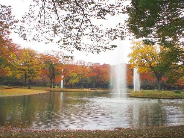 代々木公園の園内には噴水や広場があり、黄葉とともに楽しめる