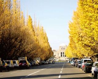 都会を彩る秋の絶景!東京23区の紅葉スポット8選
