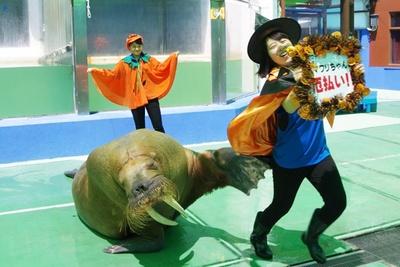 悪魔ばらいもできるイベント!?今年の春に開催された「ヒレアシ甲子園」で、 見事NO.1に選ばれたセイウチのヒマワリが登場!