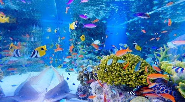 沖縄美ら海水族館の生き物たちが大集合
