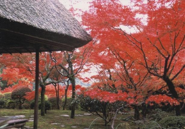 画像提供:神埼市
