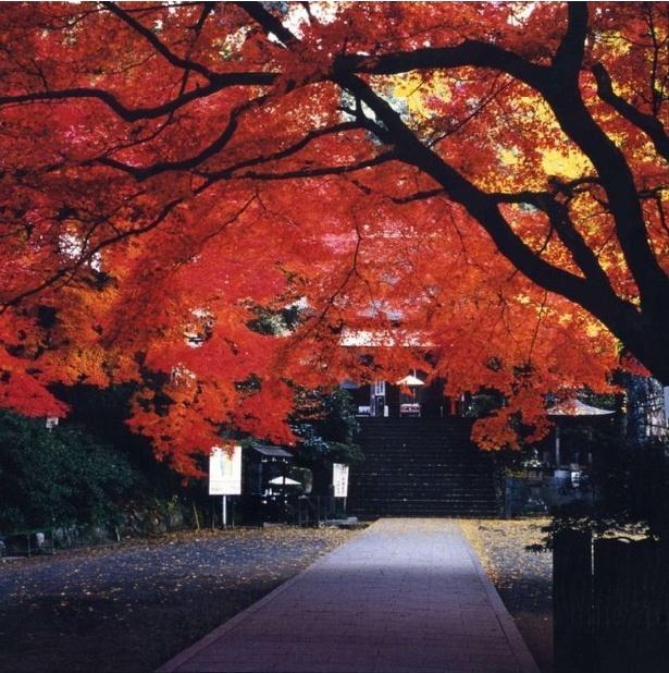 画像提供:基山町観光協会