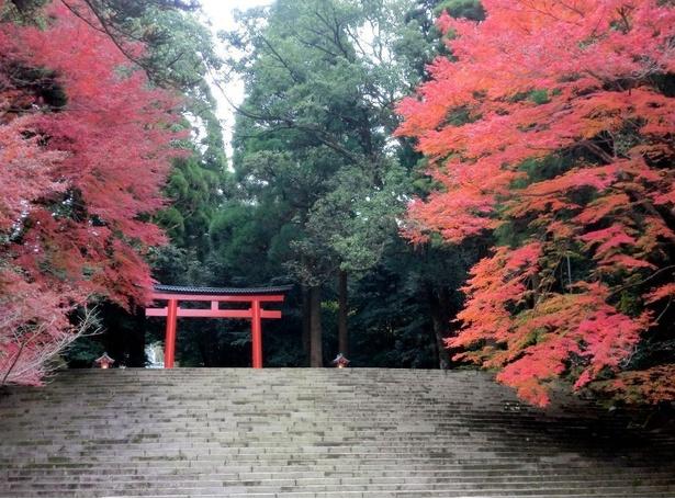 幻想的な紅葉の霧島神宮