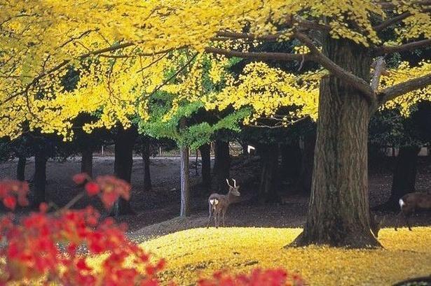 画像提供:奈良公園事務所