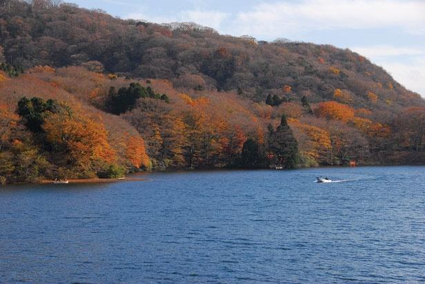 富士山まで見渡せる、贅沢な景観美が魅力の芦ノ湖。湖畔をハイキングしながら、紅葉狩りを楽しむのがおすすめだ