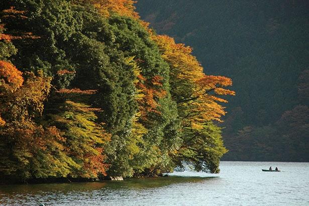 芦ノ湖の遊覧船に乗り、湖上から紅葉を見るとまた違った魅力が感じられる